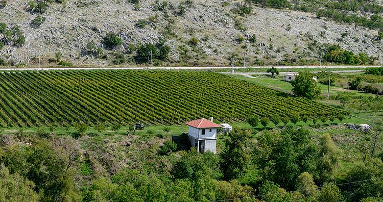 Najpopularnije vinske ture u Crnoj Gori